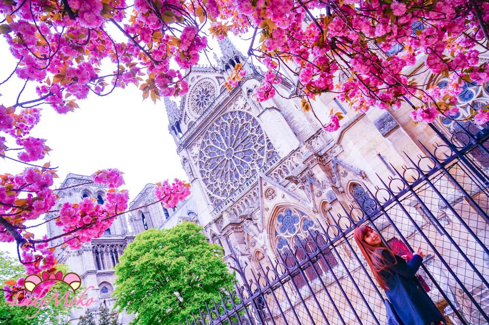 巴黎賞櫻》巴黎聖母院Notre Dame,櫻花盛放美到屏息的巴黎賞櫻勝地