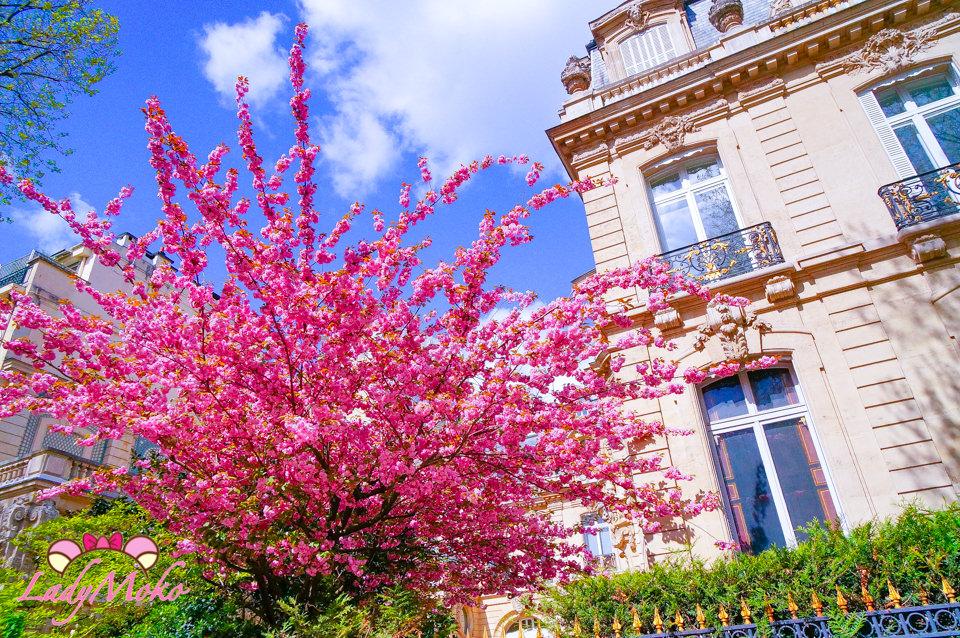 巴黎賞櫻》Parc Monceau蒙梭公園,嬌點湛藍天空的粉嫩櫻花,那些我在巴黎放空的日子