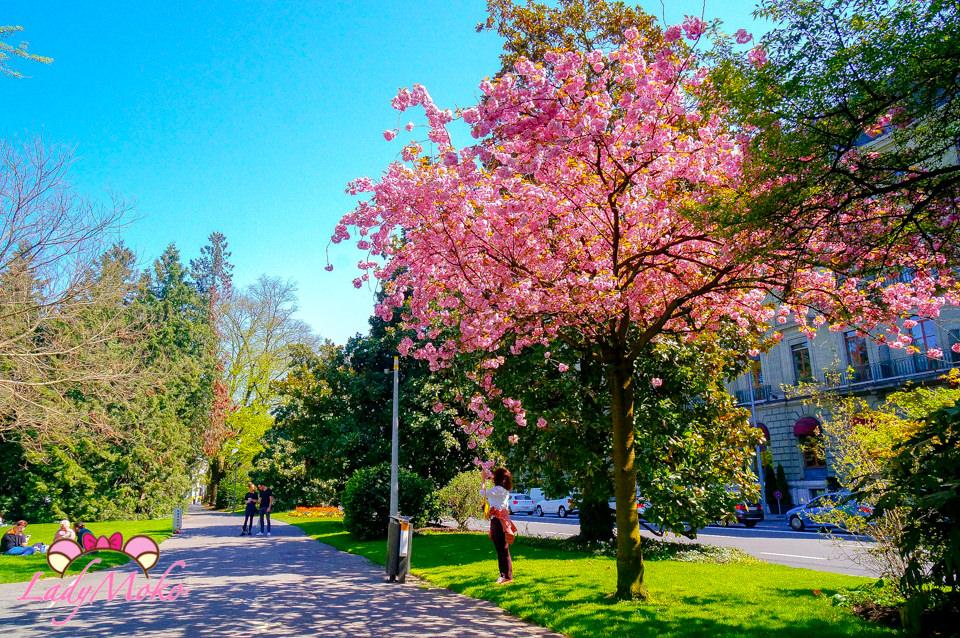 瑞士日內瓦景點》繽紛花鐘與櫻花盛開的英國花園Jardin Anglais