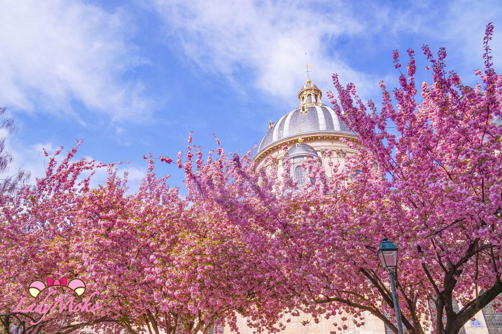 巴黎賞櫻秘密景點|Square Gabriel Pierné 爆滿櫻花的小小夢幻廣場