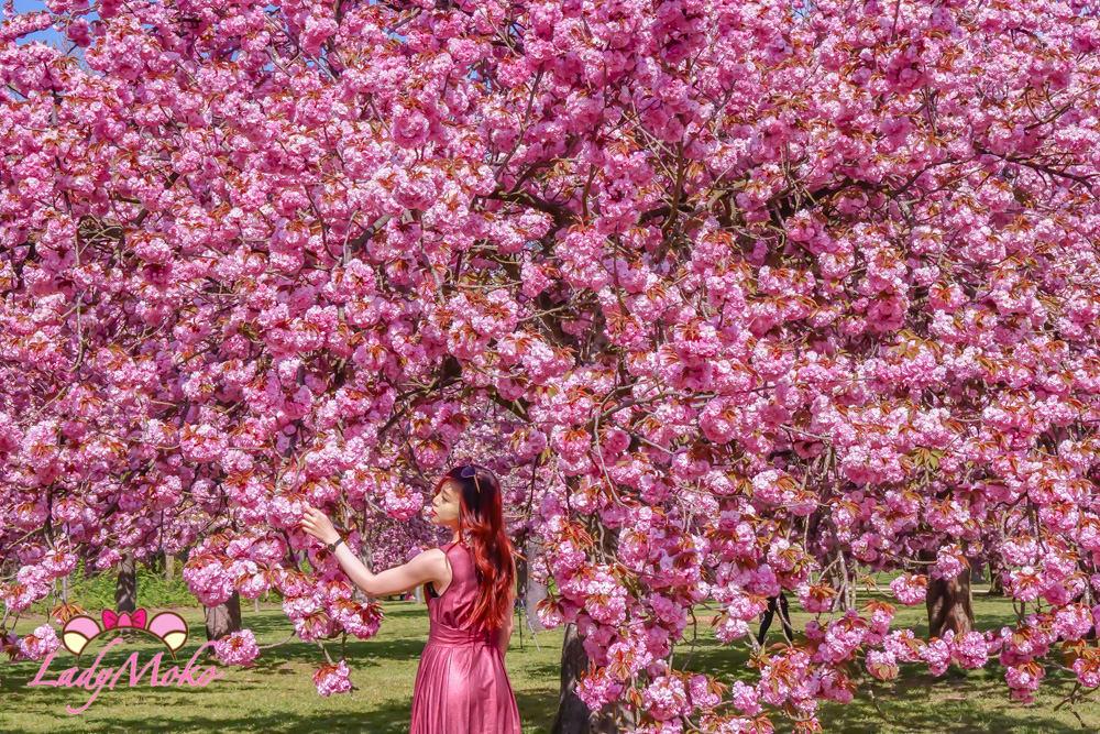 巴黎最美櫻花公園Parc de Sceaux|交通/櫻花區所在地/花季時間
