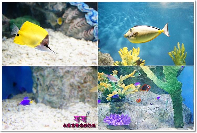 小樽水族館4