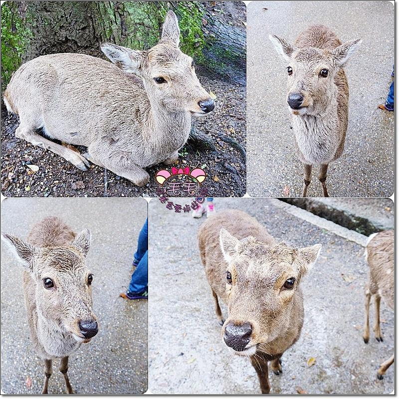 奈良鹿鹿1