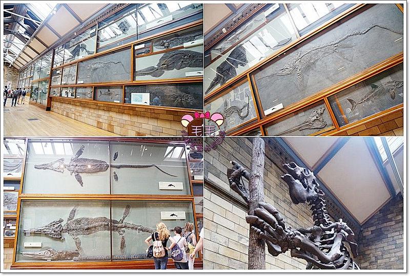 自然歷史博物館2