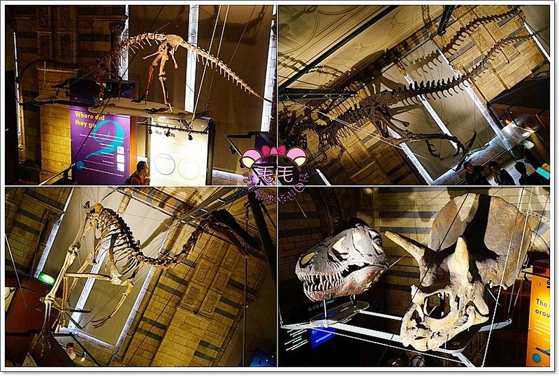 自然歷史博物館5