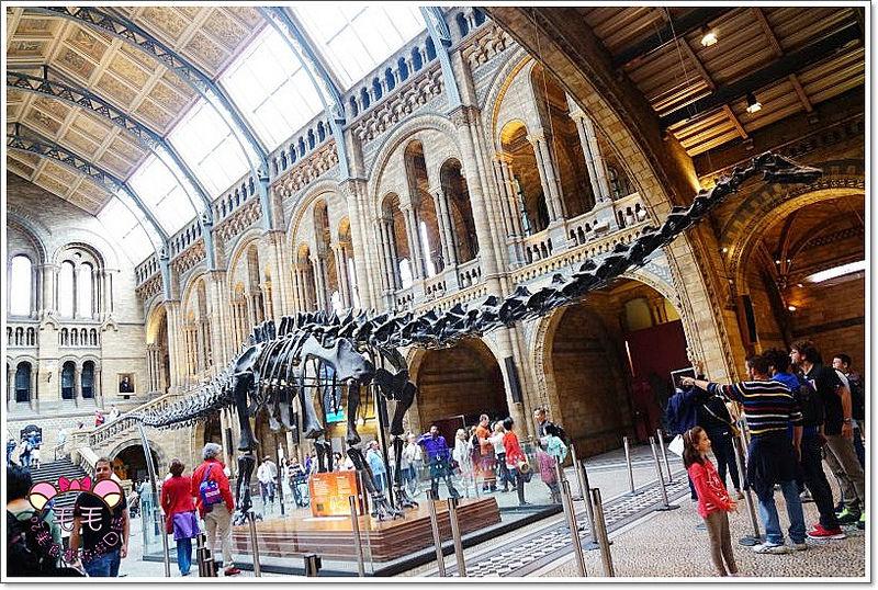 英國倫敦景點推薦 》Natural History Museum自然歷史博物館。標本與大型恐龍骨頭,極具教育性質,可以來走走看看補充知識力(South Kensington Station|V&A|Tombo)