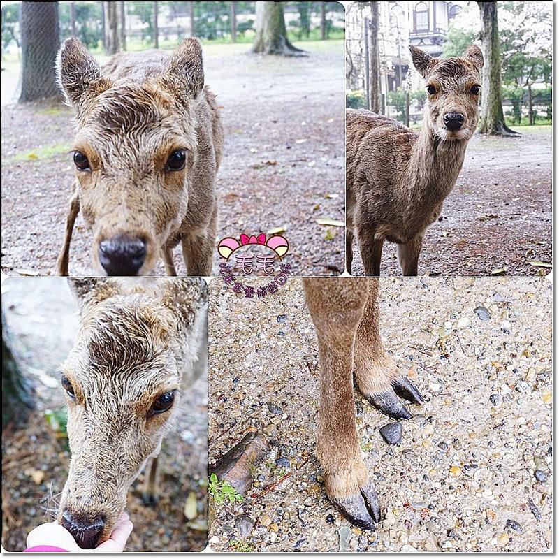 奈良鹿鹿3