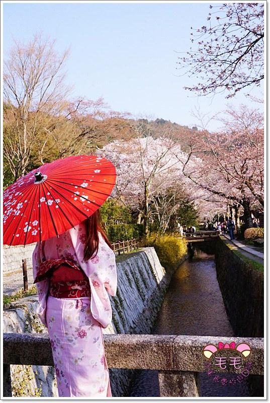 京都和服賞櫻 》岡崎神社&哲學之道。可愛兔寶神社♥求子請來此,美麗櫻花哲學之道♥美到讓人依戀不捨(京阪自由行|和服租借)