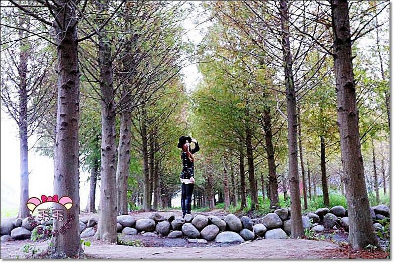 台中霧峰 》落羽松秘境。霧峰景點推薦.台中一日遊.北岸路,大自然的黃綠紅水彩畫♥