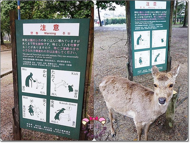 奈良鹿鹿4