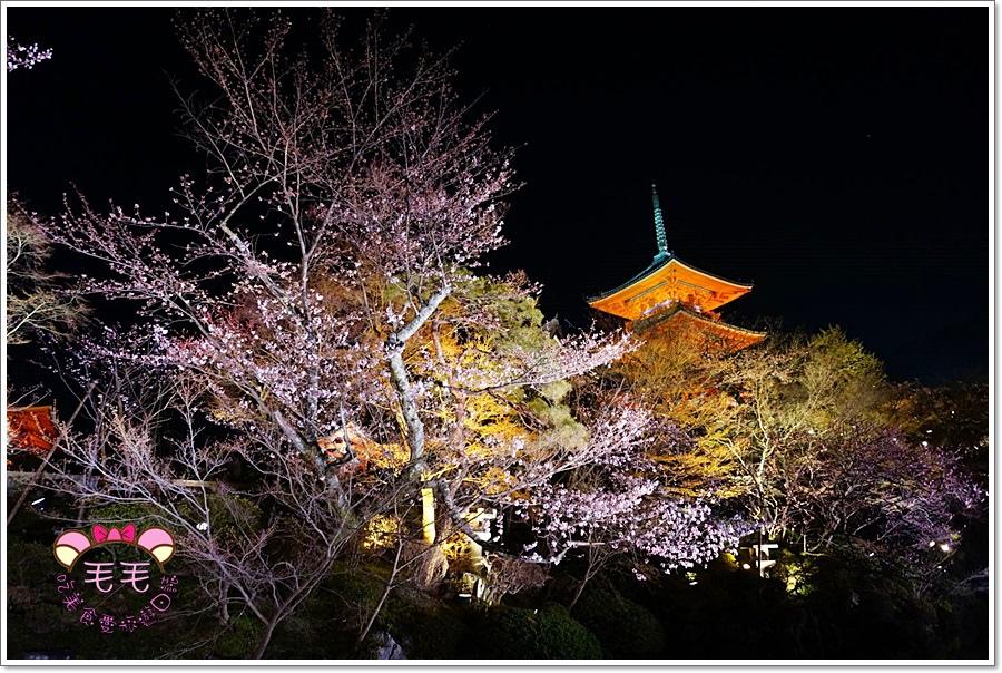 京都清水寺 》夜櫻必賞。夜間特別拜觀,京都賞櫻必來之處,嘆為觀止的驚艷與感動
