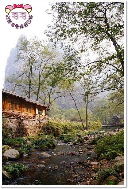 湖南張家界 》必去景點2:金鞭溪。清澈的溪水,找尋金鞭魚娃娃魚的蹤跡(10月秋 遊記 行程安排)