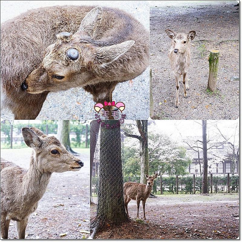 奈良鹿鹿2
