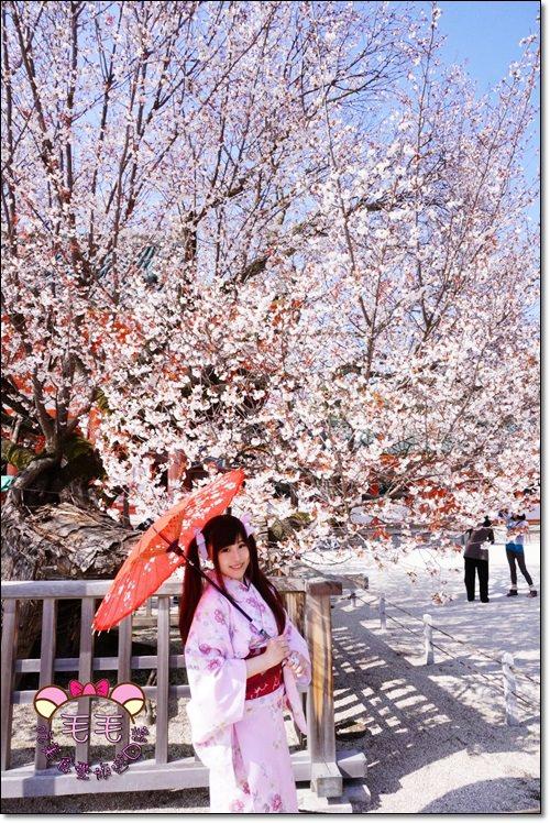 京都和服賞櫻》平安神宮。京都最大鳥居與紅枝垂櫻的簇擁,紅色是那神苑的訴說,身著和服,打著傘.優雅散步(京阪自由行.行程推薦安排)